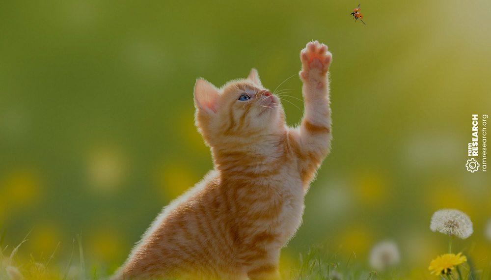 ginger kitten swatting at a bug outside