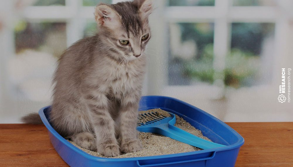 cat sitting in a blue litter box
