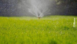 sprinkler on lush green grass