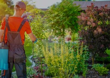 beautiful garden and a man spraying it for weeds
