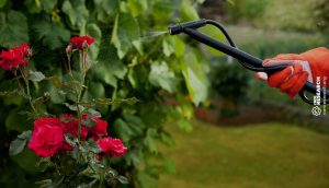 gardener spraying the garden