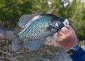 man holding a crappie fish