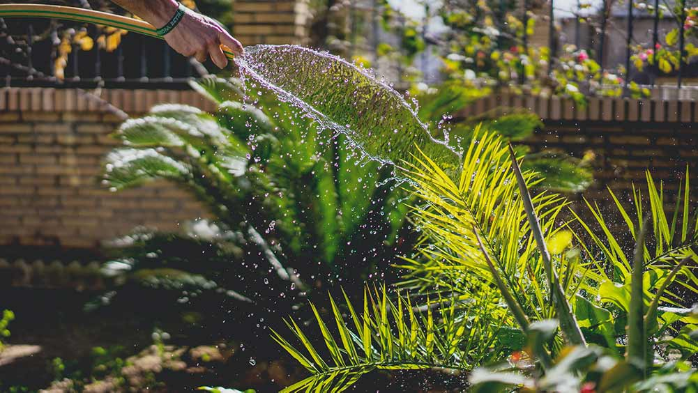 using a hose to water the garden
