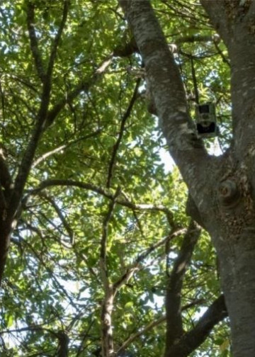 Trail Cam in a tree